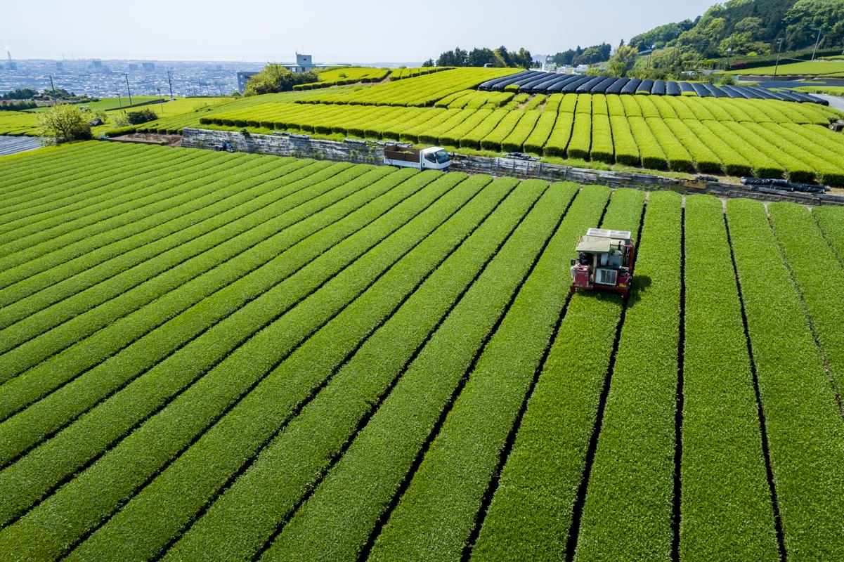 富士市のお茶ー勝亦園ー